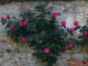 Muro con rose